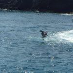 blue-footed boobies, Las Islas Marietas, Puerto Vallarta excursion