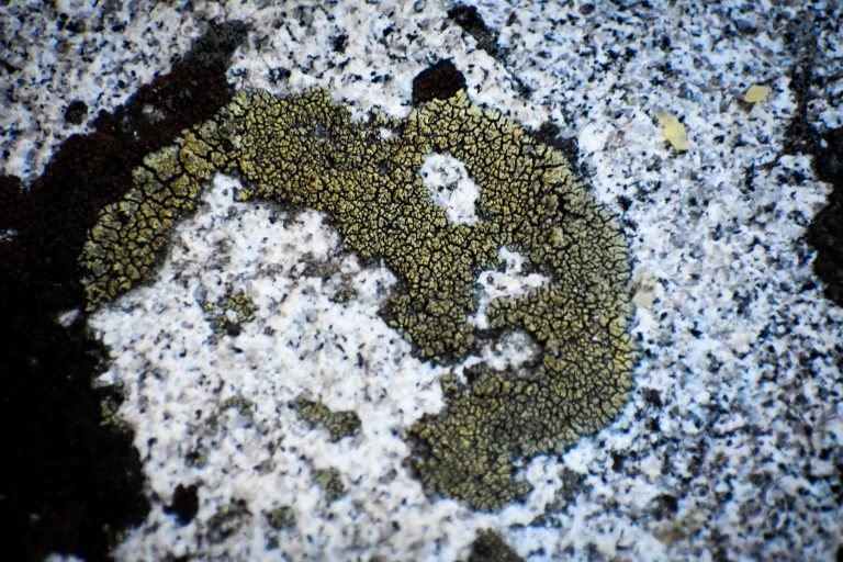 lichen or moss, BLM camping