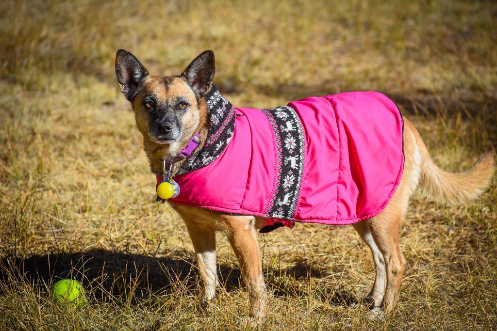 dog BLM camping